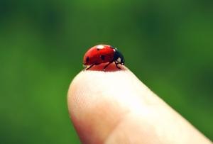 ladybug_by_cloe_patra-d3gsoo8